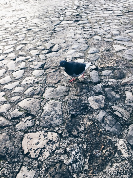 friendly pigeon in the Courtyard