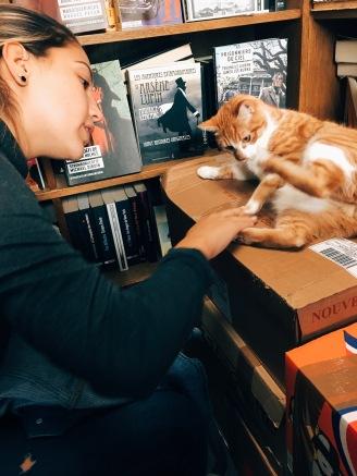 bookstore cat