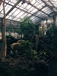 Cacti in the Botanical Gardens