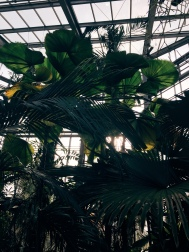 inside the greenhouse of the Botanical Gardens